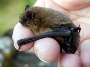 Bat Friendly Wild Flower Mix