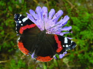 butterfly mix