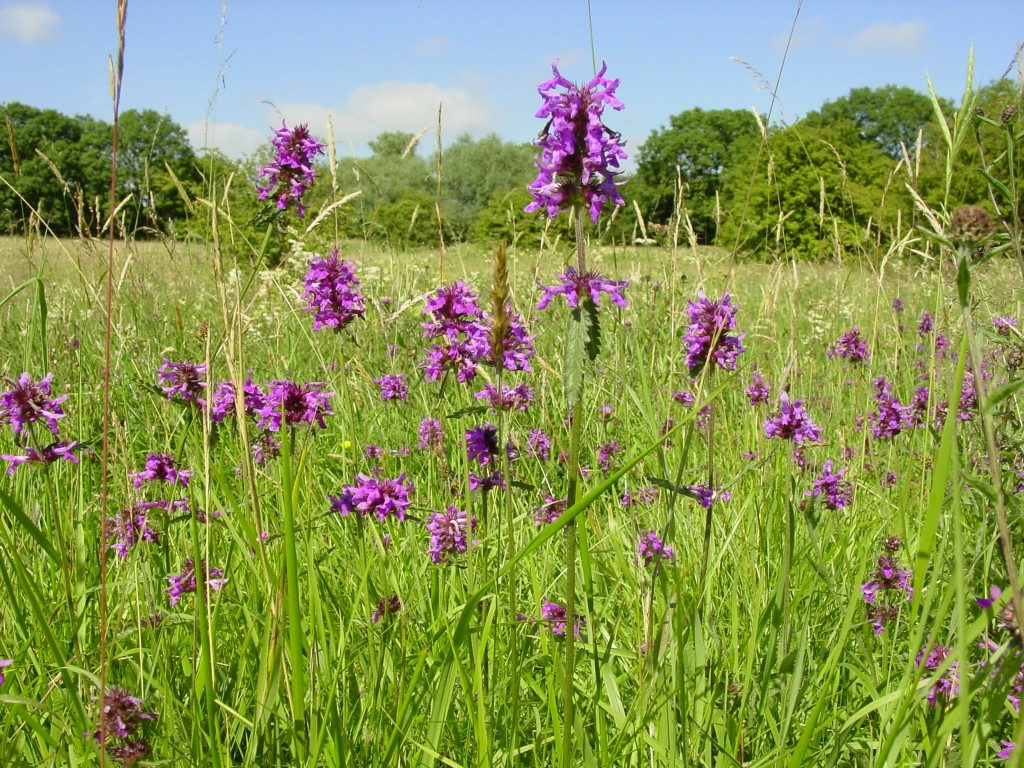 Wildflower meadow seeds mix suppliers british flora for The soil the soil