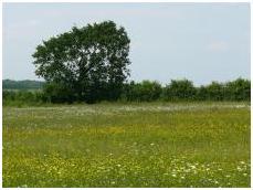 flower_meadow