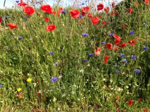 British Flora Annual Wildflower Seed Mix