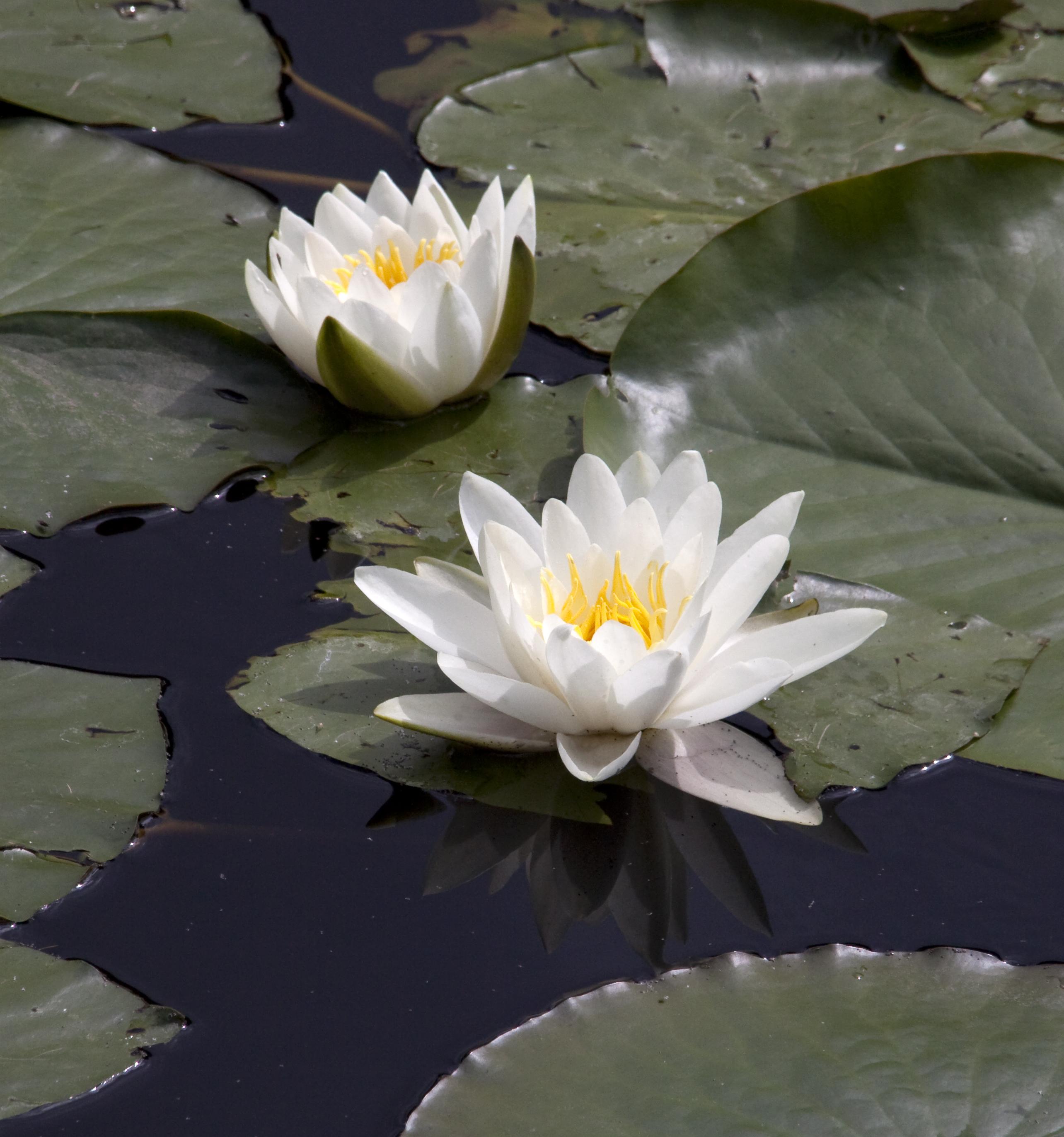 3701013061 Ff13acdb43 O British Flora