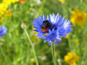 Bumblebee mix