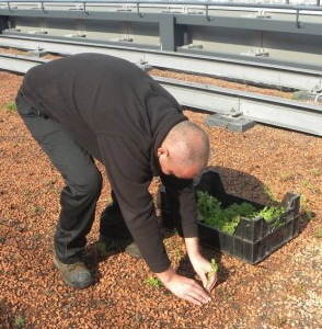 greenroofin substrate