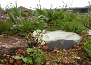 greenroofing image