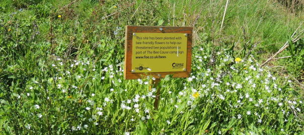 Wildflowers for wildlife area
